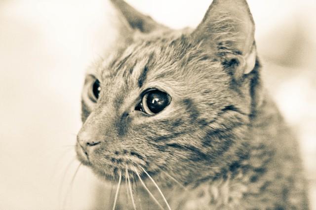Comma cat